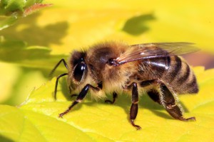 bio-diversity audit - bee